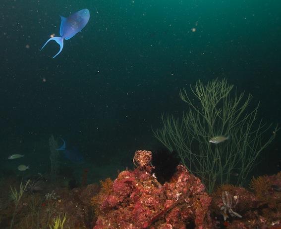 fond marin Oman (2)